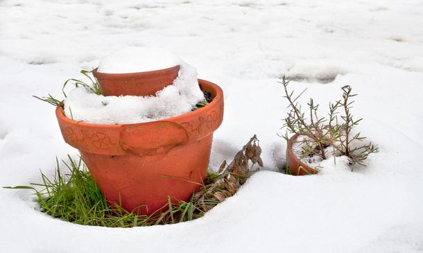Terrakotta im Winter | Gartenwoche