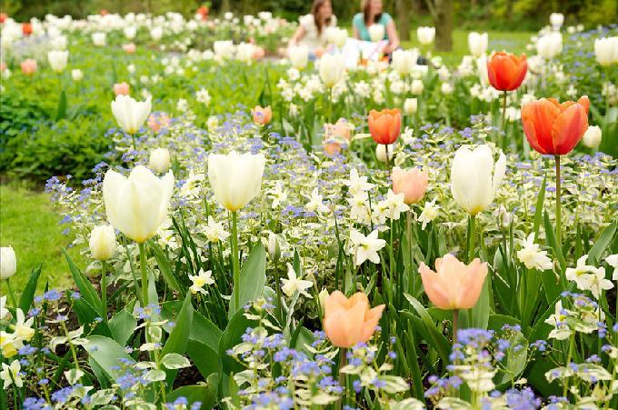Blumenzwiebeln und Stauden kombiniert.