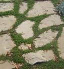 Beispiel begrünter Fugen im Garten