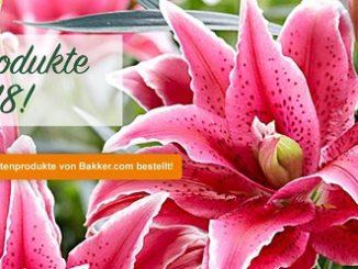 Bild Homepage bakker.com