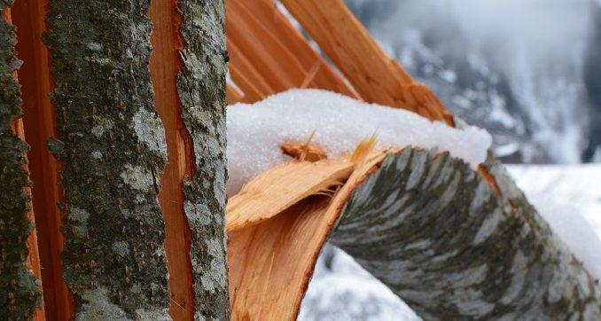 Holzschaden