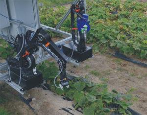 Roboter Gurkenernte