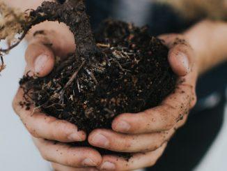 Gartenerde in Händen