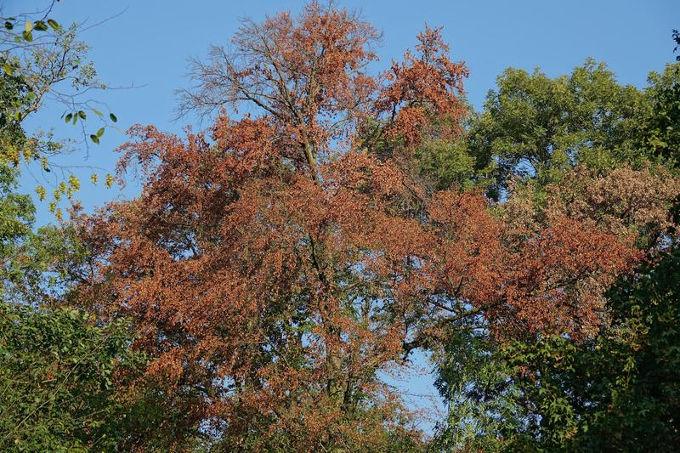 Baum wirft Blätter ab