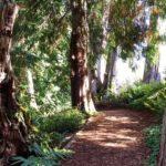 Bloedel Reserve Garden