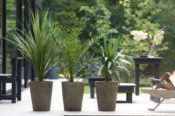 Palmen auf Terrasse