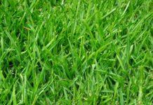 Detail Rasenfläche