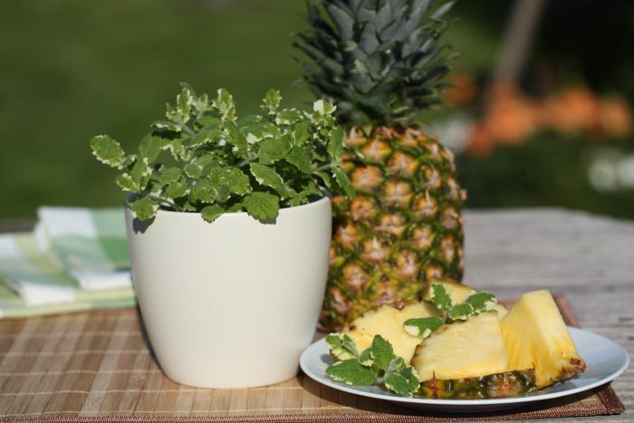 Ananasminze