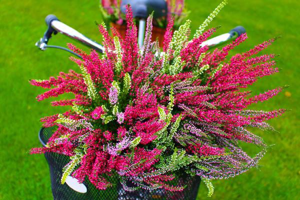 Heide Twistergirls