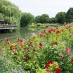 Chigago Botanical Garden