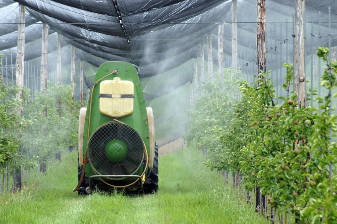 Pestizideinsatz im Gewächshaus