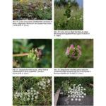 Veröffentlichung Botanischer Verein Bochum