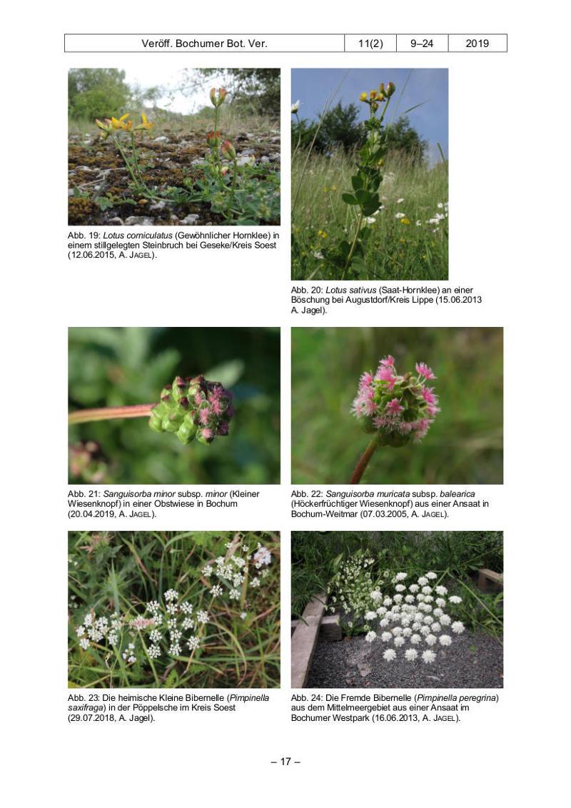 Veröffentlichung-Botanischer-Verein-Bochum