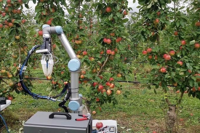 Roboter der Äpfel pflückt